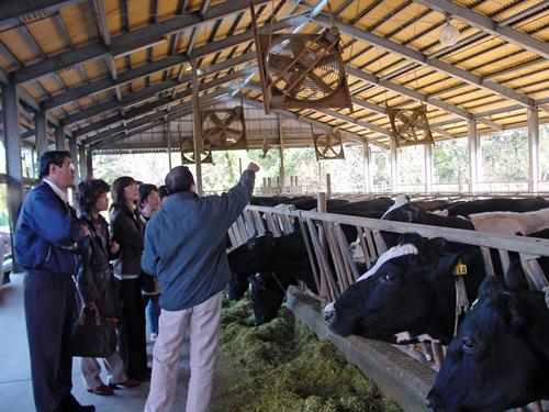 千葉北部酪農農業協同組合(八千代牛乳)畜舎