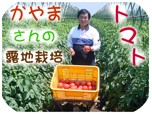 トマト 栽培