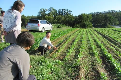 おきたま興農舎在来種ほうれん草「あかね」