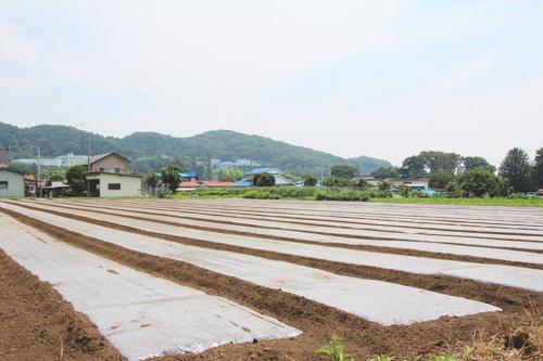千葉さんの畑4