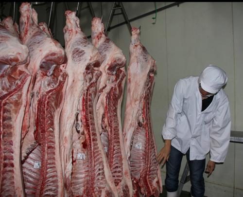 中津ミート 熟成中の枝肉