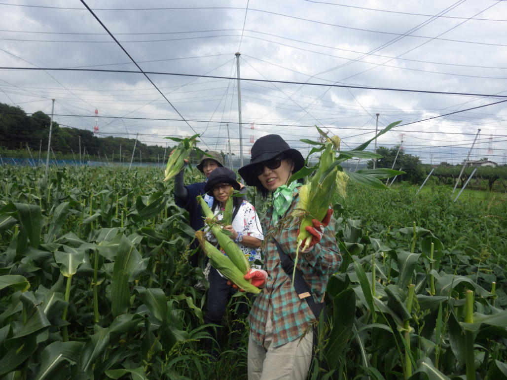 白井エコクラブ 中村さんの畑6