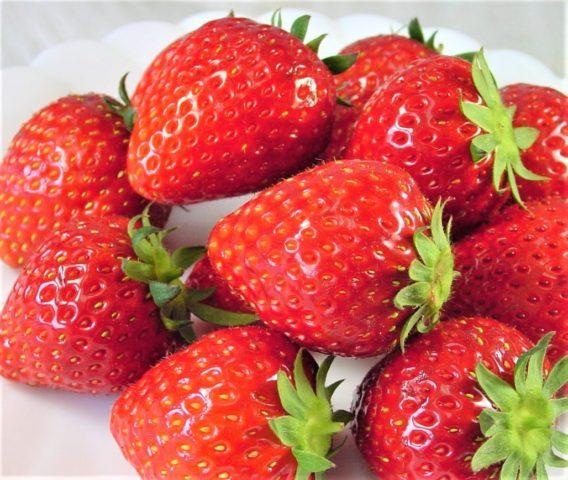 嘉山さんのイチゴ