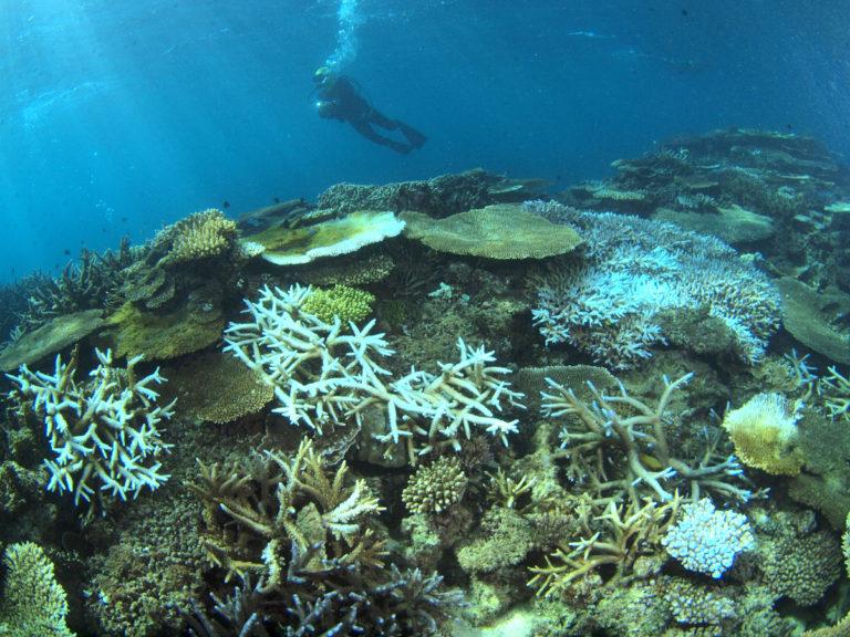 エコストアパパラギ 白化が進む沖縄辺野古のサンゴ